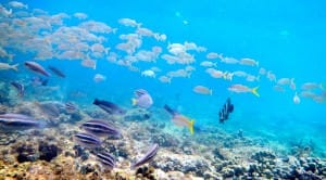 You won't find clear water or healthy sea life in Guanabara Bay.