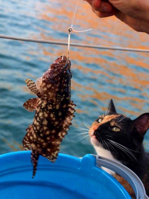 nessie and rockfish