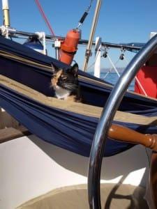 nessie in hammock