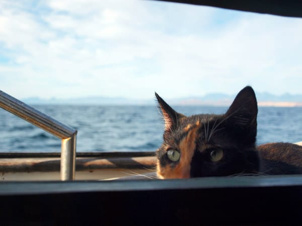 nessie watching