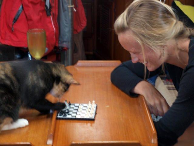 nessie playing chess