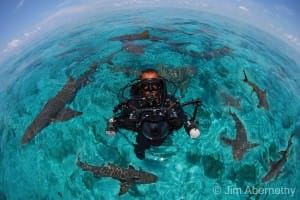 jim abernethy swimming with sharks