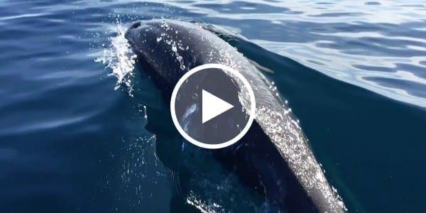Dolphin Encounter Video